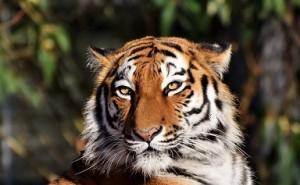 技術企業の高収益化: 虎の威を借る狐
