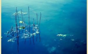 藻から燃料 :新環境経営 (その26)