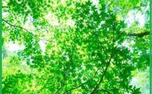 感性工学をを振り返って :新環境経営 (その39)